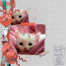 03-cdip-dans-les-yeux-de-kitty