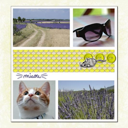 04-miaou-v4-web