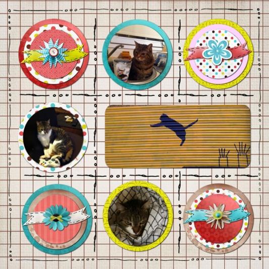 10-my-cats-v4-web