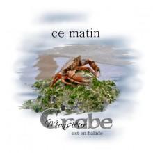 19-monsieur-crabe-v4-web