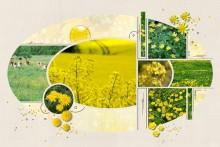 23-jdauchy-explosion-de-jaune