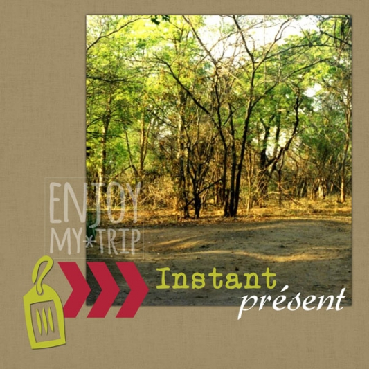 album-zimbabwe-19