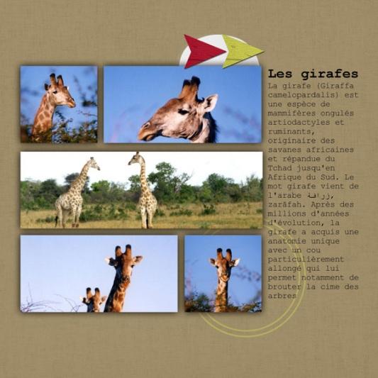 album-zimbabwe-22