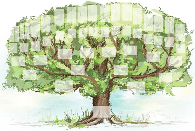 Pack d'arbre Généatique
