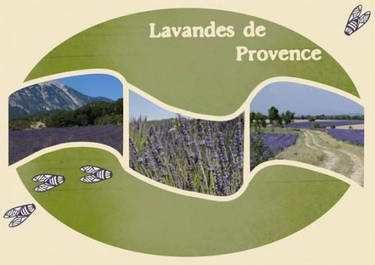 kit-soleil-provencal-22-lavandes-de-provence-v4-web