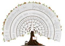 Modèle arbre ascendant 9 génération