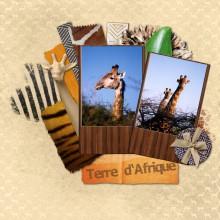 08-cdip-terre-d-afrique