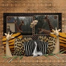 10-iola-les-girafes