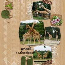 22-larel-girafes