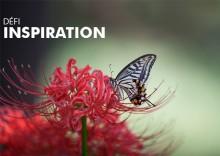 defi-inspiration-fleurs-visuel-web.jpg